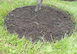 Tre muligheder for at få en flot og velfriseret have