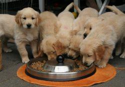 Orijen hundefoder - når kun det bedste er godt nok til din hund